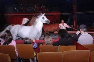 FART. Det är full fart från början då Cirkus Maximum drar igång årets föreställning, som  i kväll ges i Sandviken.