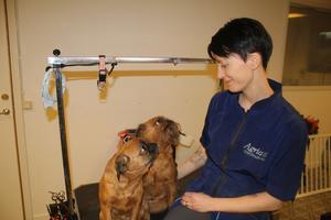 Madeleine Erichsen med sina griffoner i sin nyöppnade hundsalong: Även utan matlust  får jag kickar i livet av barn och hundar, säger hon.