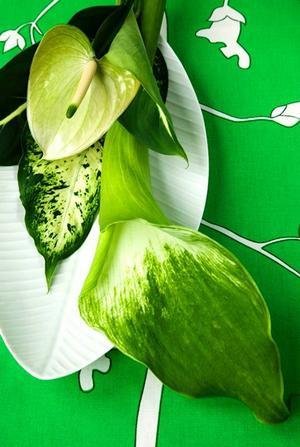 Grönt, gärna i många olika nyanser och strukturer, är starkt förekommande.