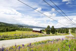 Björkvattnet är den näst äldsta byn i Frostviken. Redan år 1754 bosatte sig Hans Eriksson från Norge på platsen – 140 år senare drogs den första landsvägen till byn.
