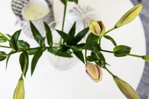 """""""Jag har bytt ut en del växter, jag har inte världens grönaste fingrar"""", säger Ann Liljeqvist."""