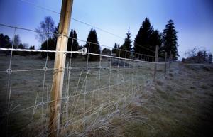 Det är näst intill omöjligt att stängsla varg ute. Därför är länsstyrelsens agerande gentemot gården Molstaberg trakasserier mot enskilda bönder, skriver representanter för Landsbygdspartiet oberoende.