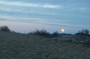 Den här synen mötte mig en tidig morgon på Österlen,Skåne!