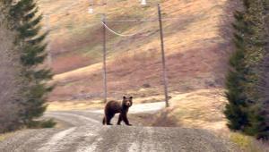 Bengt Steinar Nordbakkhade tur på björnspaningen i Frostviken häromdagen.