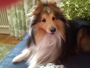 Hunden Balto.