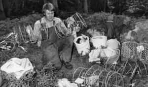 Ort: Sandarne   Rubrik: Jodå, det fanns kräftor i år också. Oxhjärta    och siklöja gav fångst.   Bildtext: Kjell Pettersson skötte markservicen vid Pipsjön åt två kräftfiskande bröder Treard. Det innebar att Kjell gjorde i ordning burar och beten (siklöjor).