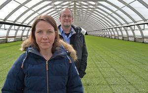 """Ett växthus på Amsbergs plantskola rymmer cirka 1,4 miljoner plantor. """"Det är fullt ös här nu"""", säger Malin Lindström Eriksson, biträdande plantskolechef. Plantskolechef Oskar Skogström håller med."""