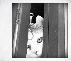 Tepp-Tepp är världens mysigaste katt, tjock och go. Här kikar han ut genom fönstret och undrar vad vi gör där ute.