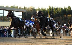 Erik Adielsson tog tre segrar på V75 i lördags. Här vinner han med Passionate Kemp i den tredje avdelningen.  Foto: Maria Holmén
