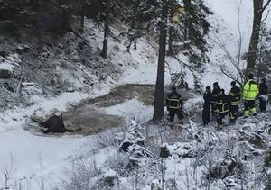 Läsarbild 72063@op.se. Räddningstjänst och polis ryckte ut till platsen där den skadade älgen låg.