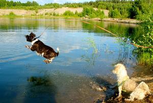 Frasse och Charlie njuter av bad och tävlar i längdhopp. De hela avslutas gärna med rullning i sanden...