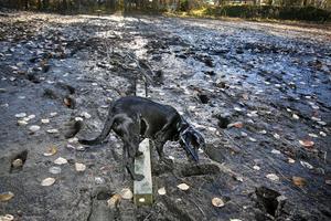 Hunden Tindra vid leråkern i Bomhus där hon och matte fastnade på tisdagskvällen. Räddningsinsatsen från Greger Bäckström tog över 20 minuter.– Att det inte finns några avspärrningar eller varningsskyltar är obegripligt, säger han.