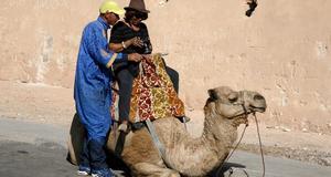 Många passar på att ta en kameltur vid kasbahn.