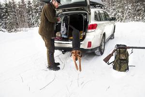 Helmer är ivrig att bege sig iväg. Kalle sätter på ett halsband med en pejl på, så att vi hela tiden kan följa hundens rörelsemönster.