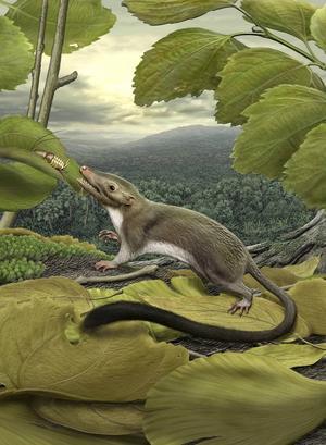 De flesta av däggdjuren på dinosauriernas tid var små och likande nutida näbbmöss eller spetsekorrar. Merparten av dem dog ut samtidigt med dinosaurierna. Bild: Carl Buell.