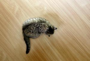 Kattägaren i Örnsköldsvik varnas – för fjärde gången. Katten på bilden har inget samband med texten.