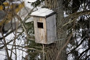 Beroende på holkens storlek flyttar olika fåglar in. Foto: TT