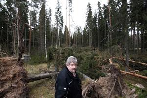 stormfällt. En 200 meter lång gata av stormfälld skog har nu Stig Bergström i Toretorp att ta reda på. När Dagmar drog fram över gården strax intill hörde han ingenting av trädfällningen och blev mycket förvånad på morgonen.