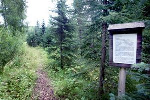 Tydliga informationsskyltar berättar var ursprunget till träden finns och vad virket används till. De flesta arterna på området används inte i den svenska skogsindustrin.