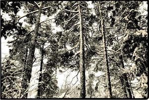 Skog i vinterskrud.