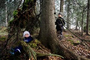 Viggo Nilsson-Larsson och Elis Eng hjälptes åt att bygga den här kojan som kan fungera som skydd när man gått vilse i skogen. Foto: Ulrika Andersson