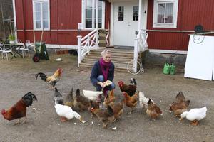 Hönsen, tupparna och ankorna är mycket oskygga. Anne-Christine Nyberg matar dem med bröd.