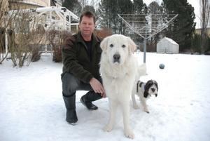 I söndags var Kaj Hedström ute med sin hund Zimba av rasen Maremmano abruzzese, då han fick se två vargar springa in i skogen. Han såg också spår efter ytterligare två. Charli, av rasen Bassett Petit, hade han tänkt använda i jakt, men nu vågar han inte släppa honom lös i skogen.