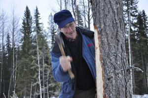 Peter Karlström skadar barken på en tall medvetet för att trädet ska skydda sig. Tallen producerar pionosylvin och kåda till det skadade området där det bildas en övervallning, hinna, och blir