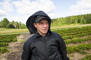 Bengt Westman har sadlat om till lärare efter att ha drivit bärodlingen i 20 år.