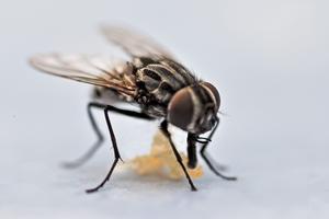 En fluga och en brödsmula på vårat trädgårdsbord.