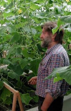 Pekka Nygårds kombinerade fisk och tomatodling uppmärksammas nu av Fiskeriverket.