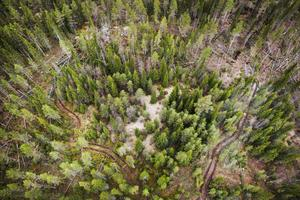 Tjälen i stora delar av länet kommer att försämras med klimatförändringarna. Det i sin tur leder till att skogarna blir mer stormkänsliga och skadorna större.