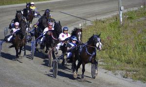 Tävlingarna i gång. Åtta kallblod gjorde upp i första loppet. Blivande segraren Mysloven och Mikael Isaksson fortfarande sist i fältet.