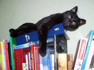 10. RASMUS, GÄVLE. Att ligga på Fass högst upp i bokhyllan är något som treårige Rasmus gillar. Där uppe har han bra utsikt och får vara i fred. Det gäller bara att hans ägare Anki Larsson inte har några spörsmål gällande läkemedel vid just de tillfällena. Fass – om katten själv får välja.