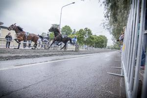 Travhästar kan springa upp till 50 kilometer i timmen.