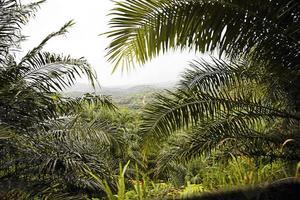 Att äta veganskt skulle inte rädda regnskogarna, skriver skribenten.