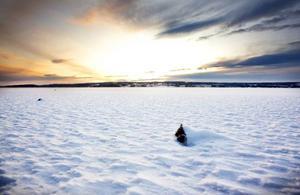 Vintern lyser ännu så länge med sin frånvaro.