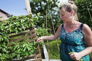 Anne Lundgren visar hur hon tuktat sitt äppelträd så det tar liten plats och samtidigt är lätt att plocka frukterna.