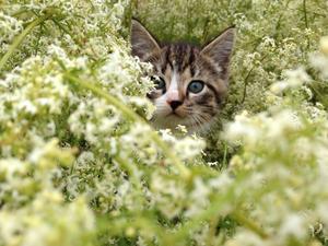 Kattunge i det höga gräset.
