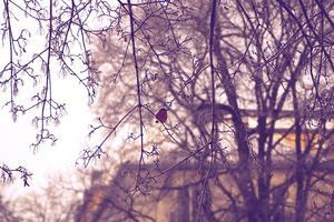 Under en kall vinterdag hittar jag denna förtjusande fågel. Det var bara att trycka på av avtryckaren..