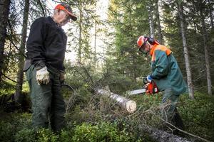 Deras gedigna arbete längs skoterlederna under höst och vår syns inte på vintern. De gamla kompisarna Valter Forsberg och Leif Eriksson samarbetar bra i skogen.