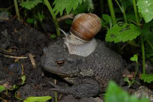 Vi hittade mor Padda i grönskan med hennes nya hatt.