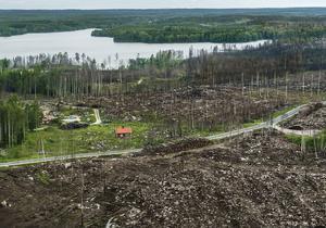 Flygbild ett år efter skogsbranden i Västmanland.