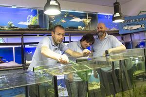 Nu gäller det att planera vilka fiskar som ska vara i vilka akvarium för Pär Häggeland, Marie Blomdahl och Lars Persson, för nya leveranser med fiskar kommer nästan varje dag.