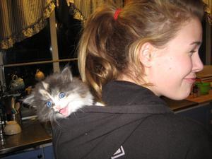 Lille syrran med sin katt lillan