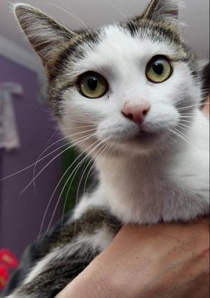En katt behöver kärlek och omvårdad, mat, vaccinationer och att bli kastrerad/steriliserad och id-märkt om den ska springa utomhus. Den kan leva upp till 20 år.