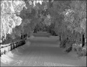 Stadsportalen: En fin och naturlig portal vid gångbron från Frösön på väg in mot Badhusparken när det var som kallast och mest frost under vintern 2010. Foto: Carl Fredriksson