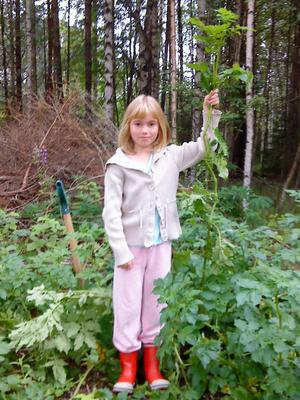 Här har Elin planterat potatis men hon tror hon odlar blast-160cm hög. Foto: Elicabeth Johansson.