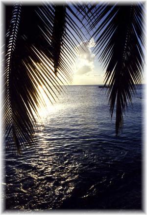 Upptäckte ett moln som liknade en kanin eller nalle när jag skulle ta en motljusbild bland palmerna på Barbados. Såg ut som den tog ett skutt !!