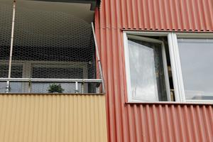 Både fönster och balkongdörr var stänga under tiden som katterna levde med den avlidne.